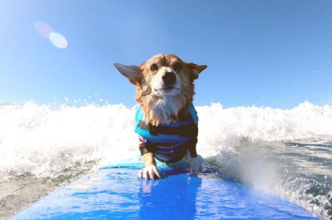 super cães disney+